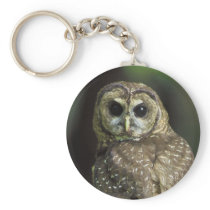 Northern Spotted Owl Keychain