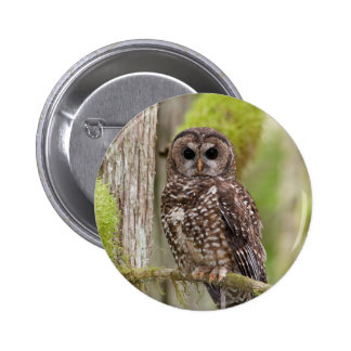 Northern Spotted Owl -Last stand in BC Pinback Buttons