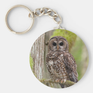 Northern Spotted Owl -Last stand in BC Keychain