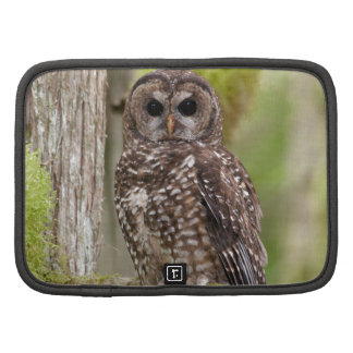 Northern Spotted Owl -Last stand in BC Folio Planners