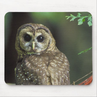 Northern Spotted Owl Mouse Pad