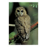 Northern Spotted Owl Posters