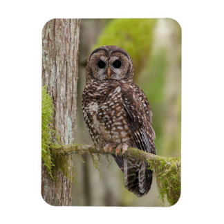 Northern spotted owl rectangular photo magnet