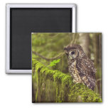Northern Spotted Owl (Strix occidentals caurina) 2 Inch Square Magnet