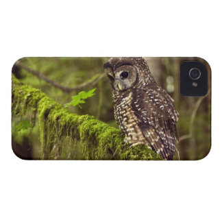 Northern Spotted Owl (Strix occidentals caurina) iPhone 4 Case-Mate Case