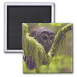 Northern Spotted Owl Strix occidentals Refrigerator Magnets