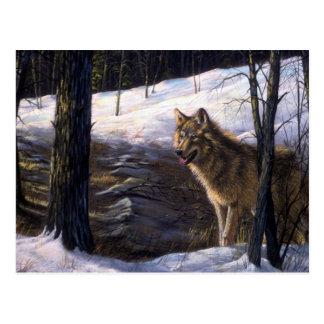 Northern Timber Wolf Postcard