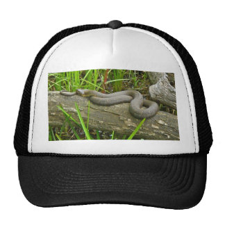 Northern Water Snake Basking on Log Multiple Items Hats