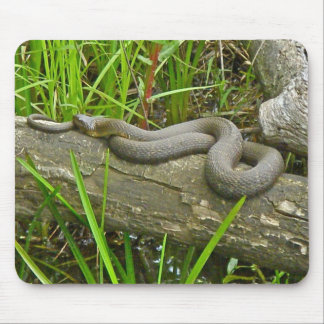 Northern Water Snake Basking on Log Multiple Items Mouse Pad