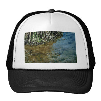 Northern Water Snake Hat