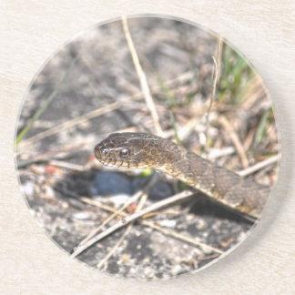 Northern Water Snake Reptile Wildlife Photo Drink Coaster