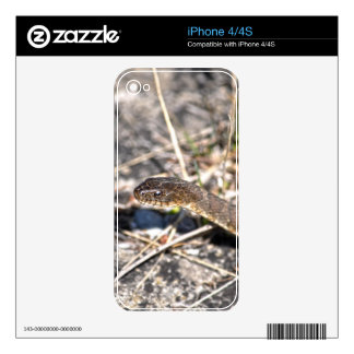 Northern Water Snake Reptile Wildlife Photo Skins For iPhone 4