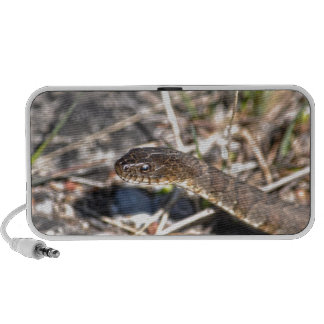 Northern Water Snake Reptile Wildlife Photo Travelling Speakers