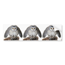 """Northern White-faced Owl"" Bumper Sticker"