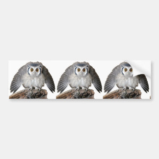 """""""Northern White-faced Owl"""" Bumper Stickers"""