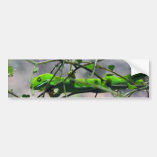 Northland Green Gecko Bumper Sticker