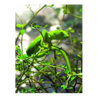 Northland Green Gecko Postcard