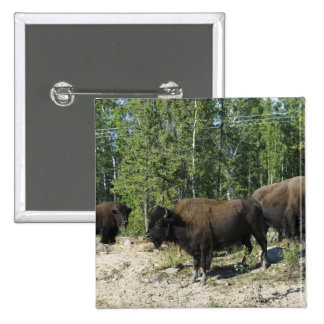 Northwest Territories. Wood Buffalo National Button