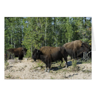 Northwest Territories. Wood Buffalo National Card
