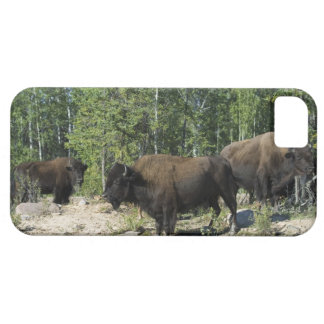 Northwest Territories. Wood Buffalo National iPhone SE/5/5s Case