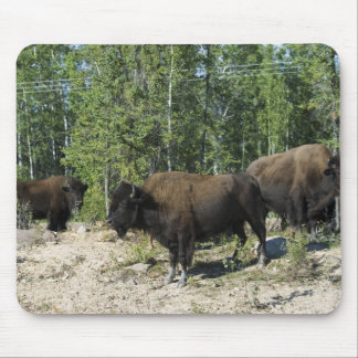 Northwest Territories. Wood Buffalo National Mouse Pad