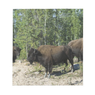 Northwest Territories. Wood Buffalo National Notepad