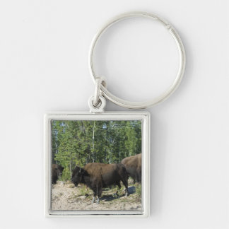 Northwest Territories. Wood Buffalo National Silver-Colored Square Keychain