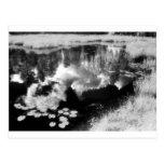 Northwoods Lake with beautiful reflected Landscape Postcard