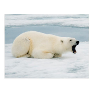 Noruega, archipiélago de Svalbard, Spitsbergen 3 Tarjetas Postales