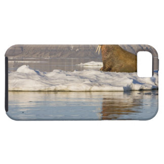 Noruega, Svalbard, isla de Edgeoya, morsa iPhone 5 Fundas