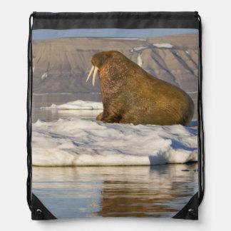 Noruega, Svalbard, isla de Edgeoya, morsa Mochilas