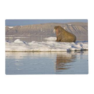 Noruega, Svalbard, isla de Edgeoya, morsa Salvamanteles