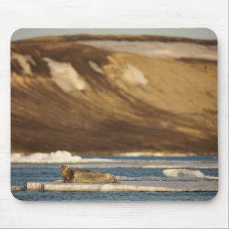 Noruega, Svalbard, isla de Spitsbergen, barbuda Mouse Pad