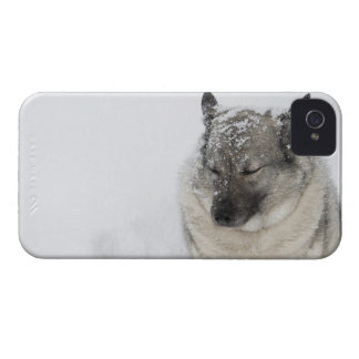 Noruego Elkhound iPhone 4 Case-Mate Fundas
