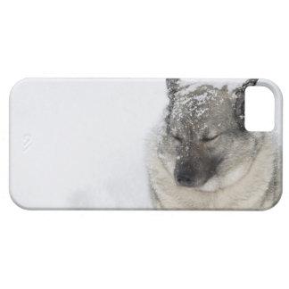 Noruego Elkhound Funda Para iPhone SE/5/5s