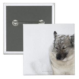 Noruego Elkhound Pin Cuadrado
