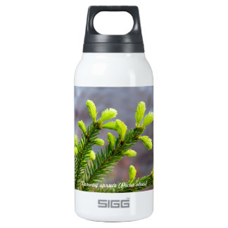 Norway spruce insulated water bottle