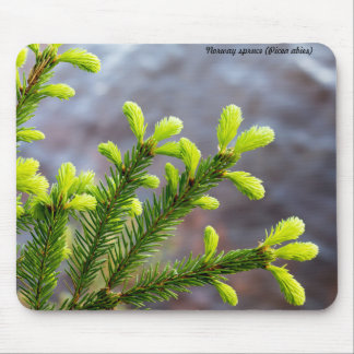 Norway spruce mousemats