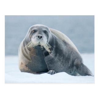 Norway, Svalbard Archipelago, Spitsbergen 4 Postcard