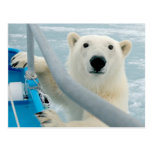 Norway, Svalbard Archipelago, Spitsbergen 5 Postcard