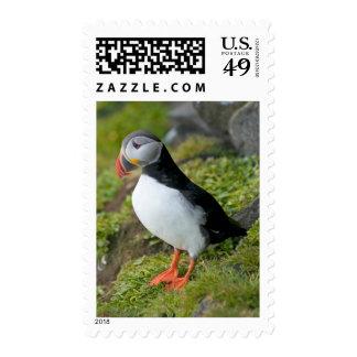 Norway, Svalbard Archipelago, Spitsbergen 9 Postage Stamp