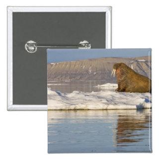 Norway, Svalbard, Edgeoya Island, Walrus Button