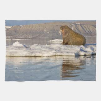 Norway, Svalbard, Edgeoya Island, Walrus Towel