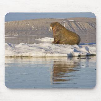 Norway, Svalbard, Edgeoya Island, Walrus Mouse Pad