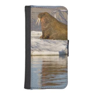 Norway, Svalbard, Edgeoya Island, Walrus iPhone 5 Wallet Cases
