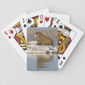 Norway, Svalbard, Edgeoya Island, Walrus Playing Cards