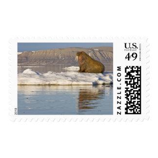 Norway, Svalbard, Edgeoya Island, Walrus Stamp