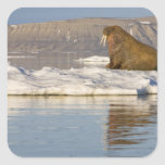 Norway, Svalbard, Edgeoya Island, Walrus Stickers