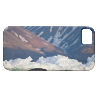 Norway, Svalbard, Spitsbergen Island, Bearded 2 iPhone SE/5/5s Case