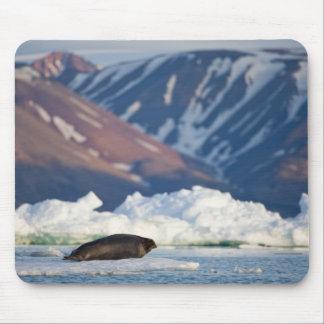 Norway, Svalbard, Spitsbergen Island, Bearded 2 Mouse Pad